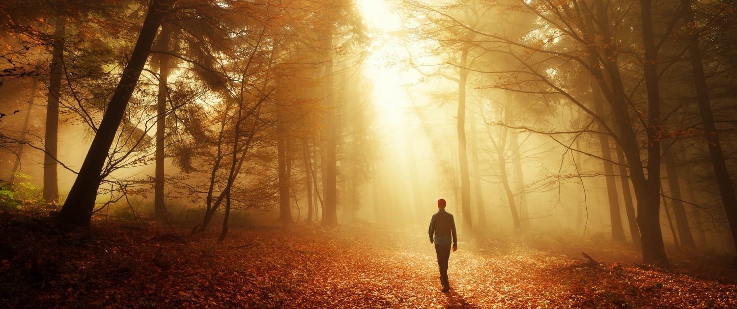 Man walking in forest with sunshine